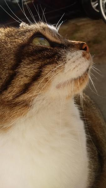 2018.2.9 地域猫の吉ちゃん。雲って面白い~。by吉。(=~~=)