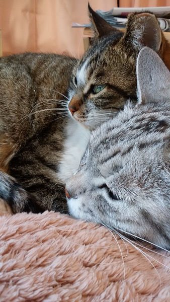 2018.3.1 地域猫吉ちゃんとマル。こうしてると暖かいね。(=^^=)