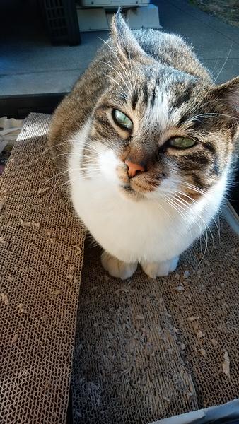 2018.2.9 地域猫の吉ちゃん。マルちゃんいますか。(=~o~=)