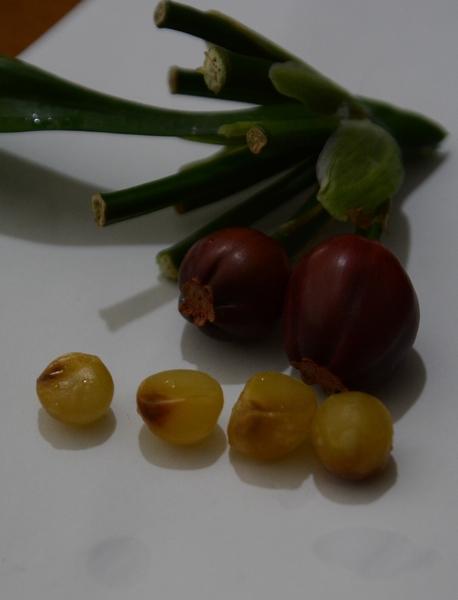 クンシランの実と種子。 種子は大きく小指の先くらいある。 今回は一つの実に1個から3