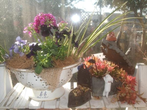 キッチングッズのコランダー(水切り)に寄せ植えを しました。 プリムラマラコイデス・