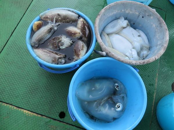 11月3日(金) 明石海峡でアオリイカ・紋甲イカ・スミイカ釣り