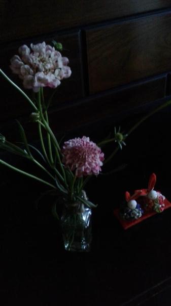 小さい小さいウサギのお雛様💛 まだ、桃の花はお店に出てなくて 花は、スカビオサです(