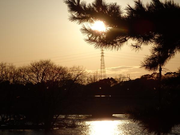 松と夕陽と鉄塔と