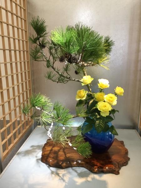 松と黄色い薔薇ですか、、、ね。なかなかイイ組み合わせです。