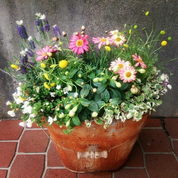 「花ほたる」を使った寄せ植えを作りたくて、作成しました。  花材 ・花ほたる ・フレ