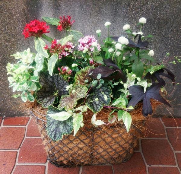 「花材」 ・イポメア スイートキャロライン ・斑入り紫式部 ・千日紅 ・オレガノ リバ