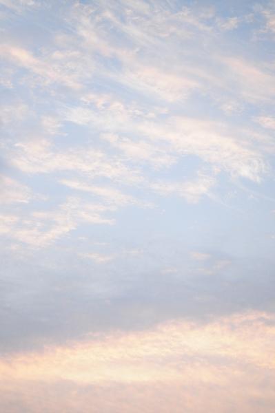 2月11日  昨晩降り続いた雨も朝には止んでいました。