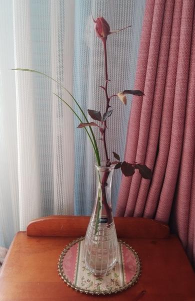 「ばら(ピンク)と春蘭の葉」📷20180217