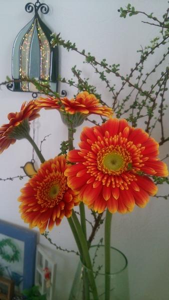 ガーベラ 切り花はあまり買わないですが、お花が可愛いので、つい買っちゃいました♪