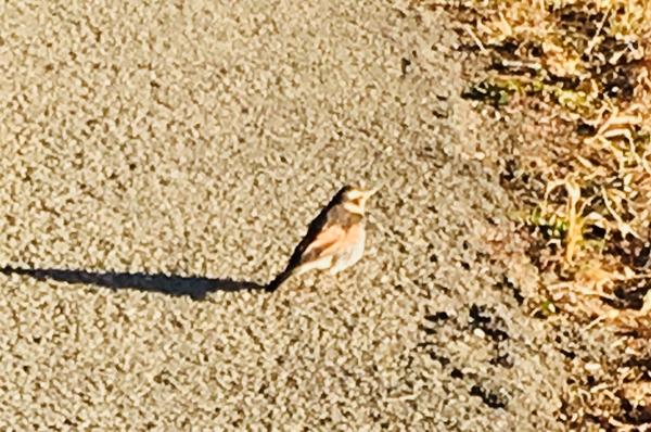 なんという名前の鳥さんかな?珍しく私に写真撮らせてくれました