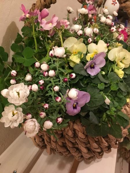 1月初めに作った籠寄せ植え😆 花かんざしが咲いてきました💕