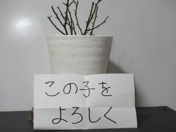 ミニバラの株分け鉢。 遠方の花朋さんから「この子をよろしく」の メッセージと共に送