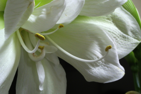 (2018.02.04)撮影。 第2花のしべです。 小さめです。