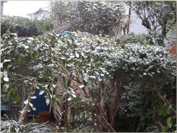 カボスの樹木もこの通り雪化粧の姿