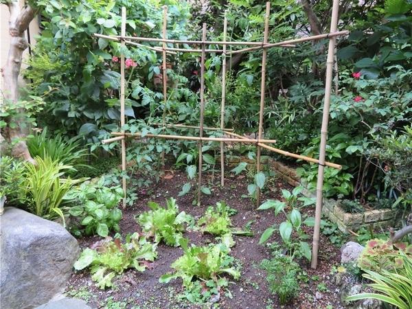 2⃣📷緑に囲まれた森の中の小さな畑という感じ、これが素人のする仕事...ココミニトマト