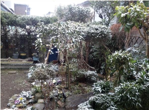 庭先側面から眺めた光景... 植物たちは白く染まっても以外に元気...🙌🙌🙌