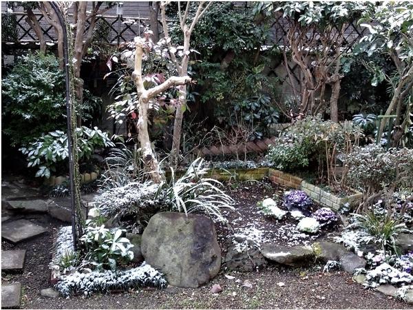庭先正面から薄っすら⛄雪の帽子をかぶった様子の植物たち