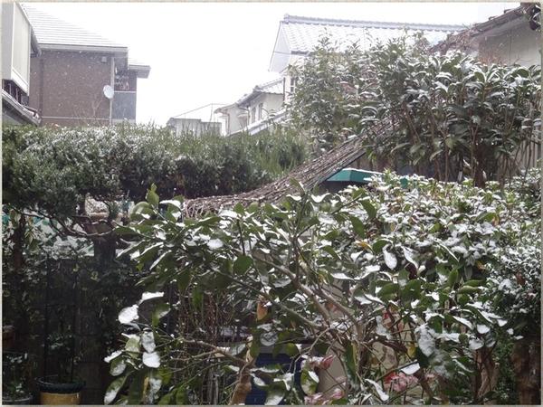 薔薇アーチも見える側面から眺めた薄っすら雪化粧の光景