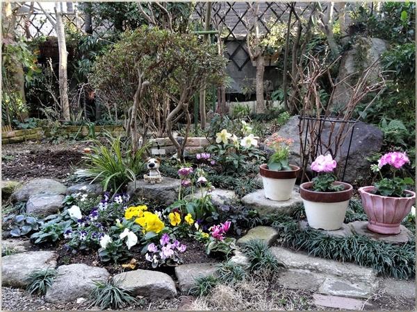 中庭の花壇を正面に眺めた光景...クリスマスローズを囲む沢山の花たち