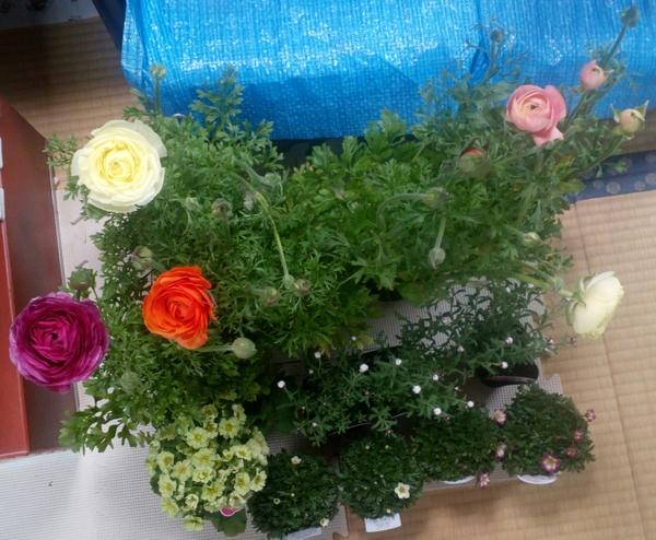 「大人買い」 この日は雨が降っており、いつも行く花屋さんで「雨の日セール」が行わ
