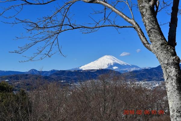 今日(2/6)の権現山山頂からの富士山 (桜の枝越し,良い感じです) この冬一番に澄み切っ
