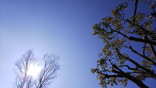 常緑樹と落葉樹を、同じ画面に撮ってみました😌 街に落葉樹ばかりだと、冬はどんなに殺