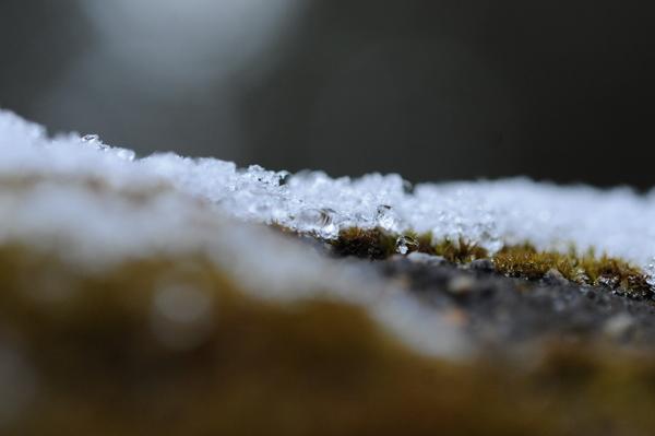 雪が溶けてきました