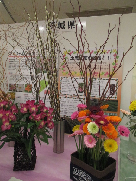 「第67回関東東海花の展覧会」より茨城県展示。 2.3撮影。
