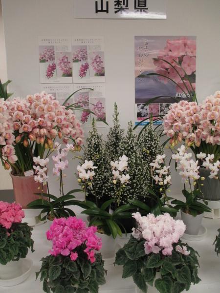 「第67回関東東海花の展覧会」より山梨県展示。 2.3撮影。
