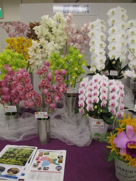「第67回関東東海花の展覧会」より群馬県展示。 2.3撮影。