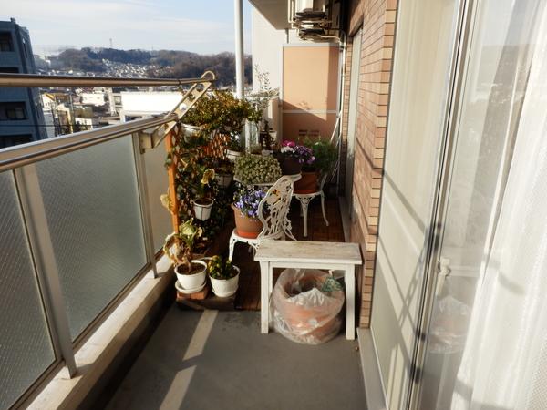 2月10日、液肥のみ、入れ替えせず枯葉色継続