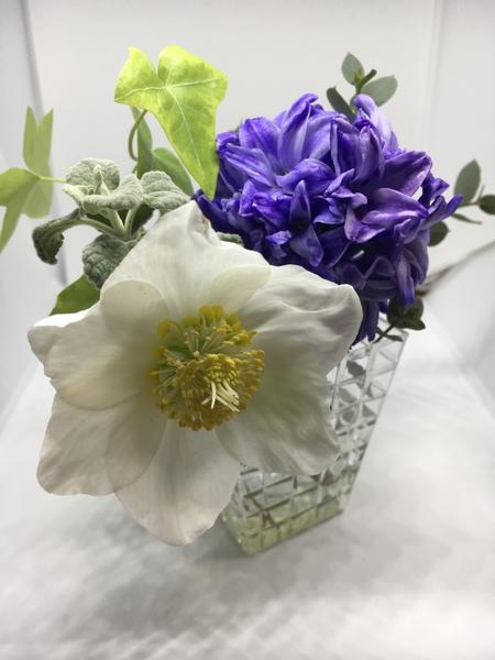 花友さんが、香りがいいヒアシンスをWCに飾っていらっしゃるとお聞きしたので、咲き終