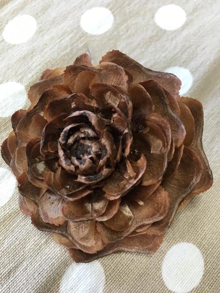 ヒマラヤ杉の松ぼっくり シダーローズ 今年は豊作で形も綺麗です♪