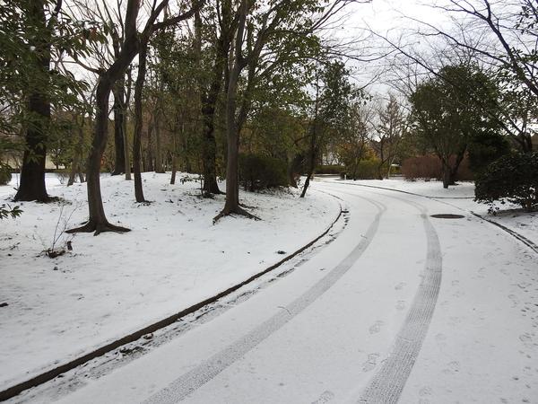 今日もさぶ~い(´;ω;`) 積雪1cm。当地方では一冬にこんな感じが数回です。  2018.