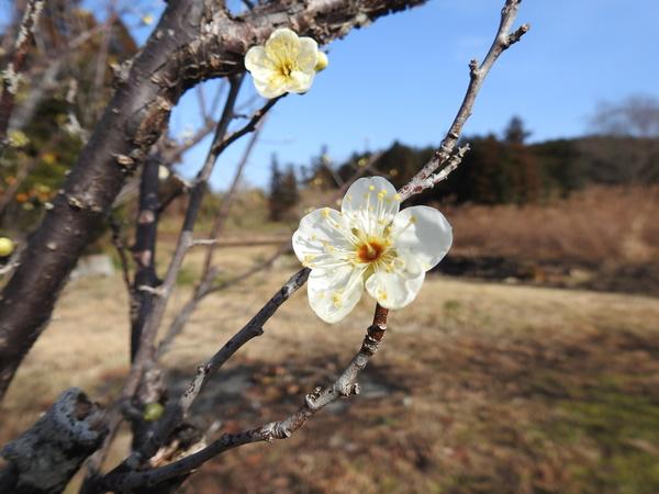 花もぽつりぽつり。 春が待ち遠しい…  2018.2.2