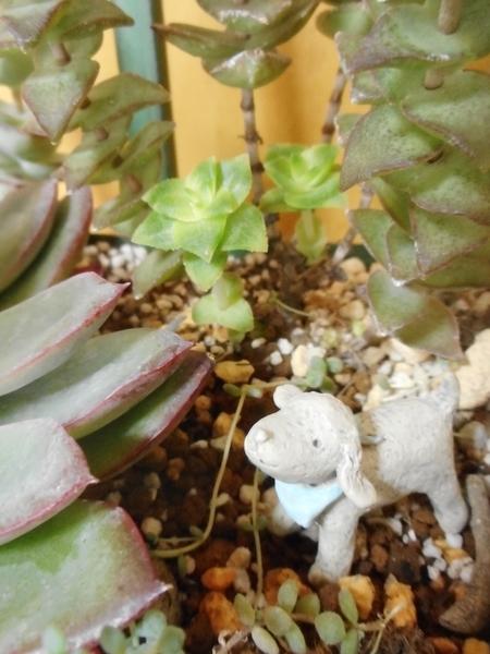 南十字星。 徒長してますが、新芽が株元から出てきました。 綺麗な若草色です♡