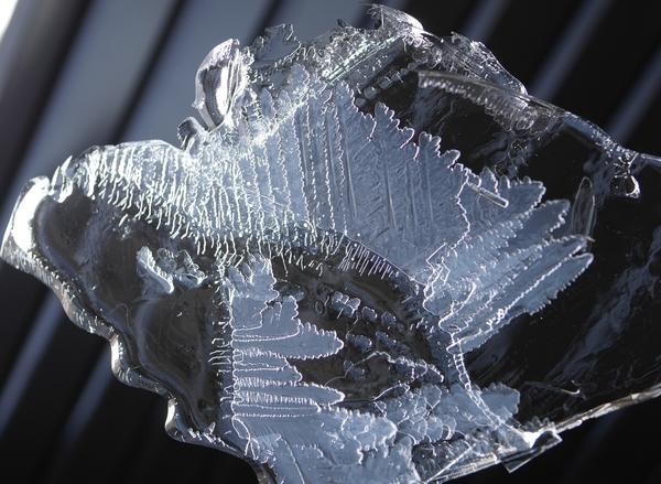 今朝の氷。 こちらでは氷が張るのは珍しいです。 持ち上げたらみたら...芸術作品でし