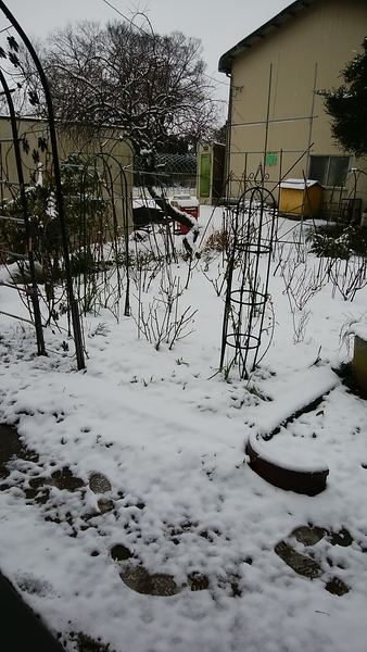 2月2日に雪が降りました
