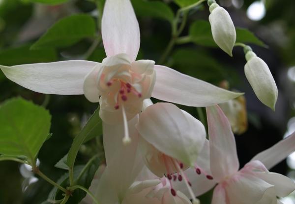 白い花が素敵~。