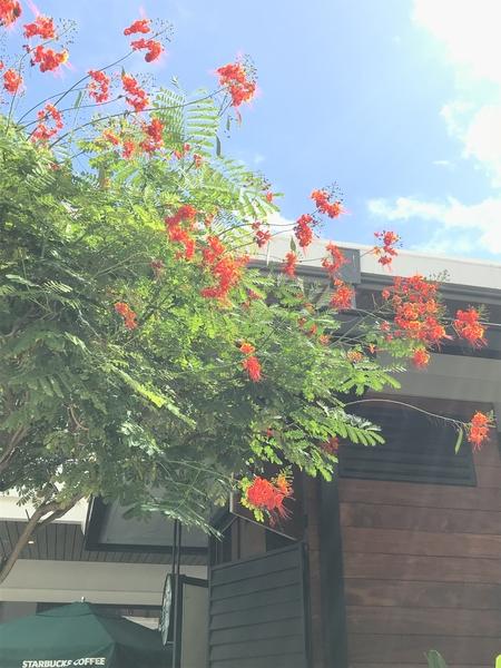 高木です たくさん咲いてました。