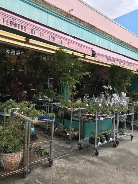 ハワイの  町で 園芸店を 見かけました なにやら盆栽らしきものがあり のぞいてみると