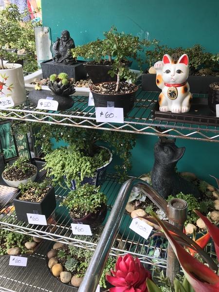 招き猫を置いたら 盆栽とは 勘違いしてほしくなーい