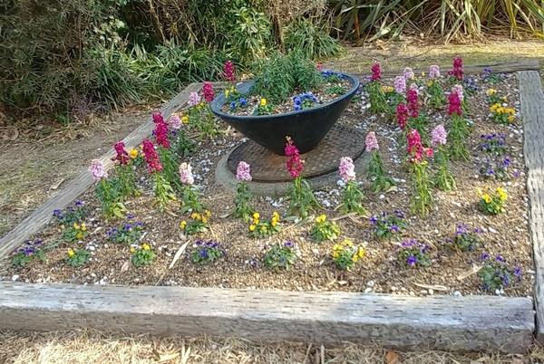 花壇には、大きくなれないけど寒くても平気な? ストックとビオラ