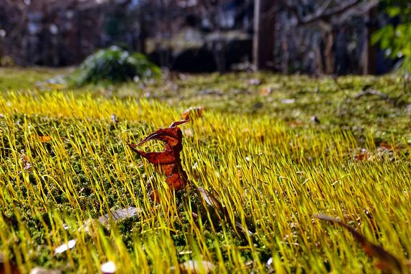 久々の多聞院。 まだ、花は少なく。 名も知らぬ苔を。  撮影地:多聞院境内にて 撮影