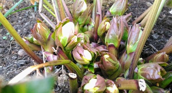 寒い冬もやっと終わるかな~ ポチポチあったかい日があって 花も喜んでるよね !(^^)!
