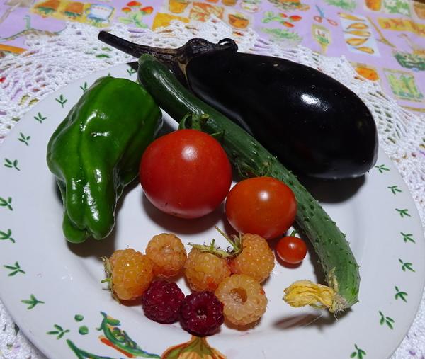 今日の収穫。 ・水ナス(初なりなので、小さめで) ・キュウリ(これも2株目の初なり