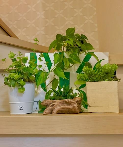 多肉植物、ポトス、オレガノ🌿 緑が綺麗です、階段に置いて撮って 見ました🌵