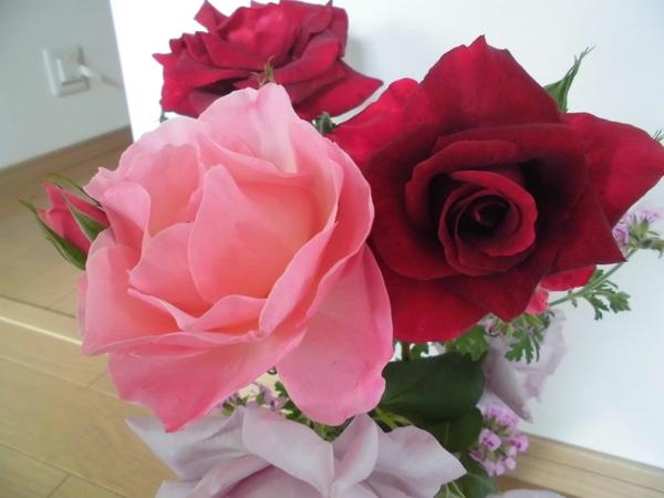 一斉に咲き始めたバラ。芳香せ有り無しですがピンク色がかなりの芳香ありです
