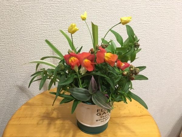 キンギョソウの鉢を倒してしまって…😱 折れました、枝。 飾りました。 エスコルチア